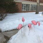 WDP Snow Flamingos